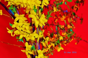 Forsythia and Berberis on red