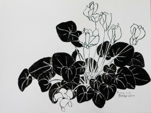 Cyclamen Plant, brush and ink drawing, based on pencil drawing, ArtHenning
