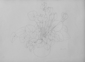 cyclamen, basic pencil drawing, ArtHenning