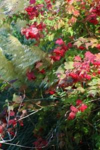 Autumn Reds, ArtHenning