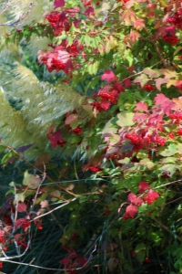 Autumn Reds, ArtHenning