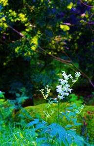 Meadowsweet Garden, ArtHenning
